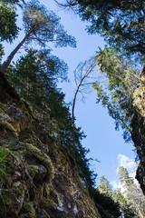 Warped perspective, quarry (JimmyBrandt) Tags: stone quarry mine tree warped perspective d7100 from below nikon sverige sweden