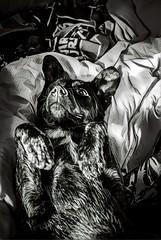 Sleeping with Frida