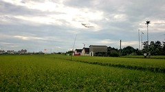 農村新風光 New countryside scenery (葉 正道 Ben(busy)) Tags: taichung taiwan countryside kite 風箏 稻田 paddy 綠色 green 路邊風景 landscape 風景 自然 nature
