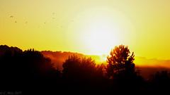 Breaking Horizon (Carl Weis1) Tags: nikon d800 misty morning outdoor nature dew sunrise beauty bracketing