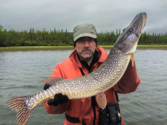 Great Slave Lake Northern Pike | Esox lucius | Brochet (Paul B Jones) Tags: northernpike esoxlucius brochet greatslavelake northwestterritories canada fishing fisher fisherman catch tourist tourism jack jackfish appleiphone5s iphone catchandrelease pauljones paulbjones