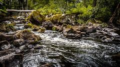 _61A4218.jpg (fotolasse) Tags: stenfors natur nature sweden sverige småland kronoberg å vatten water river bäck sten grönt green canon hdr 16x9 tingsryd