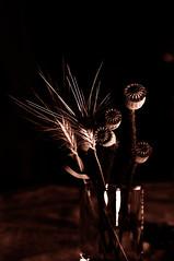 natura morta (Claudio Taras) Tags: natura claudio contrasto shadow sepia taras sigma macro monocromo monochrom bw bokeh biancoenero bokehlicious light luci stilllife