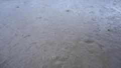 Daiwas at Dusk (essex_mud_explorer) Tags: waders watstiefel cuissardes boots rubber thigh coarsefisher hunter gates uniroyal thighboots thighwaders rubberboots muddywaders mud schlamm matsch boue creek estuary tidal saltmarsh marshes