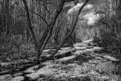 Meandering Stream, Infrared (John C. House) Tags: everydaymiracles nik nikon infrared d70s knoxville water johnchouse tennessee blackandwhite overcastsky monochrome