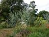 Beautiful garden in the Creuse (Elise de Korte) Tags: 23 creuse fr france frankrijk ldf lafrance limousin bloei bloeien bloem bloemen bloementuin distel fleur fleurs flower flowers garden jardin thistle tuin