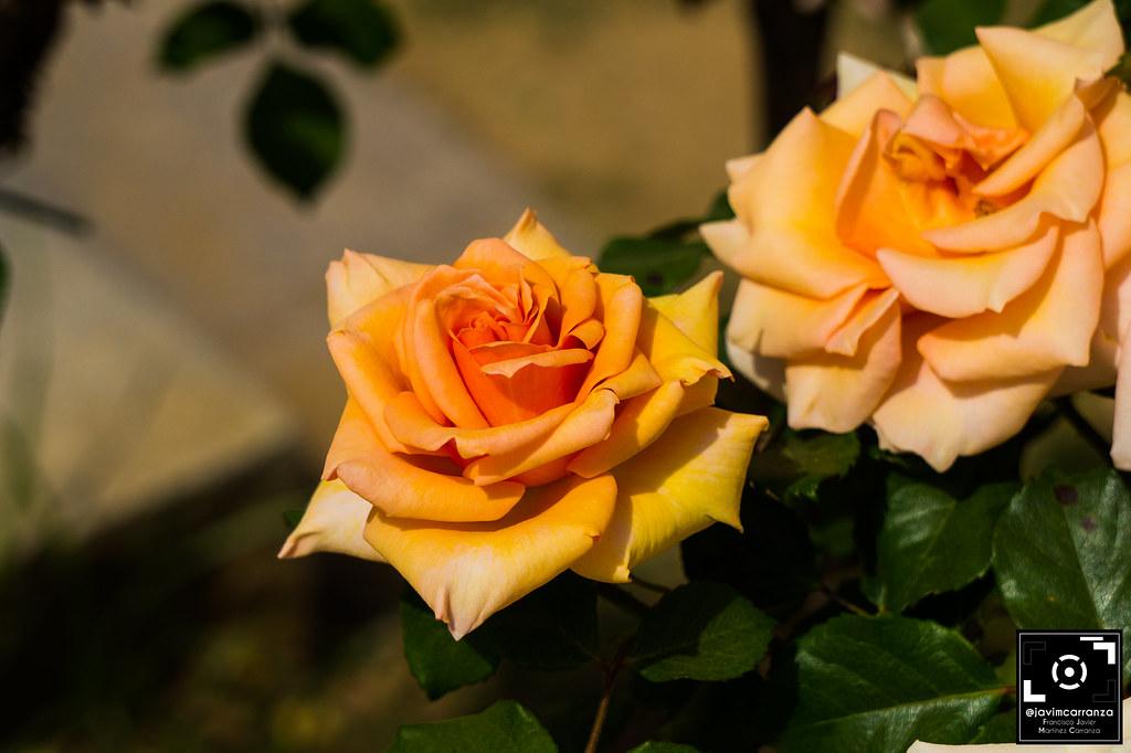 The world 39 s best photos of jardines and verde flickr for Jardines verdes