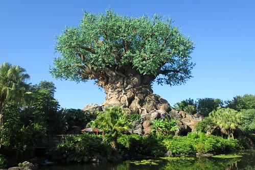 Disney World: Animal Kingdom - Tree of Life