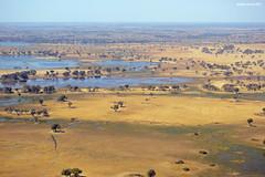 Okavango Delta (naturalturn) Tags: marsh wetland water river moremi moremigamereserve okavangodelta okavango delta botswana image:rating=5 image:id=204908