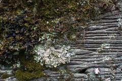 Lichen (devoutly_evasive) Tags: lichen moss rockface textured organic lines horizontal mtrose mount rose mn minnesota grandportage hiking trail layers layered