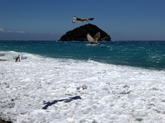 giovani gabbiani (serie) (fotomie2009) Tags: spotorno libecciata liguria sea mare storm water beach spiaggia italy italia isola bergeggi island gabbiano seagull bird uccello