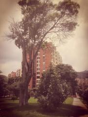 IMG_20170326_120914 (josespektrumphotography) Tags: arbol dia edificio bogota filtro cielo color josespektrumphotography