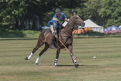 Polo on my own (DaveMac photography) Tags: polo newforest england newforestpoloclub sunday sunnyafternoon ponies equestrian equine mallets events pologame outdoors