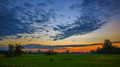 (chris191168) Tags: ricefields farmer urbanvillage northeast udonthani
