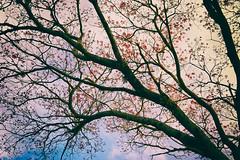 Waiting for the next season... (ricdovalle) Tags: estação season céu sky galhos branches nuvens clouds sony alpha a6000 ilce6000 sigma árvore tree inverno winter frio cold