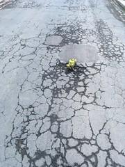Darlington in Bloom (alanpeacock2) Tags: pothole darlington tarmac street backtonature flowers