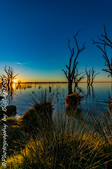 IMG_5410 (biglaptogs) Tags: barmera lakebonney riverland sa states