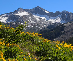 Pioneer Mountains (Ceredig Roberts) Tags: pioneermountains idaho mountains arrowleafbalsamroot