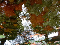 Autumnal Treetops (andressolo) Tags: reflection reflect reflections reflected reflejos reflejo river río distortion distortions distorted abstract trees tree textures leaves leaf nature