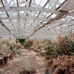 Abandonded Greenhouse [5] (jwbeatty) Tags: 120 6x6 abandoned analog carlzeissplanart80mmf28 ektar ektar100 film filmisnotdead greenhouse hasselblad500cm illinois ishootfilm kodak longgrove mediumformat plantnursery project365