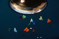 20170613 Port of Nagoya Aquarium 4 (BONGURI) Tags: 名古屋市 愛知県 日本 jp てるてる坊主 portofnagoyapublicaquarium nagoyapublicaquarium 名古屋港水族館 portofnagoya 名古屋港 minatoward 港区 港 nagoya 名古屋 aichi 愛知 sony rx100m3