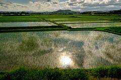 水鏡ーReflection in the water (kurumaebi) Tags: yamaguchi 秋穂 fujifilm xt20 nature landscape 山口市 田んぼ 田 japan 日本 cloud 雲