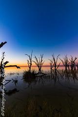 IMG_5472 (biglaptogs) Tags: barmera lakebonney riverland sa states sunsetsunrise