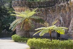 In the park of Quinta da Regaleira (Infomastern) Tags: cyatheales portugal quintadaregaleira sintra trädormbunke architecture arkitektur ferntree slott