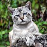 Echando la siesta como un león en su atalaya #gatos #gatoscallejeros #cats #photocats #instacats #neko #meow #gatze #gatto #koshka #catsofworld #catsofinstagram #streetcats #catsofworld #siames #siamestabbypoint #tabbypoint #animalaugh thumbnail
