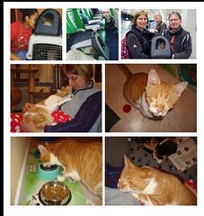 Blind cat Missy - Belgium