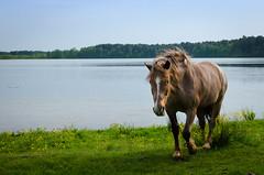 (petroborovets) Tags: hourse lake grass