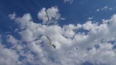 DSC05021 (omirou56) Tags: 169ratio sonydscwx500 sky clouds seagull greece hellas ελλαδα συννεφα ουρανοσ γλαροι outdoor nature natur natura
