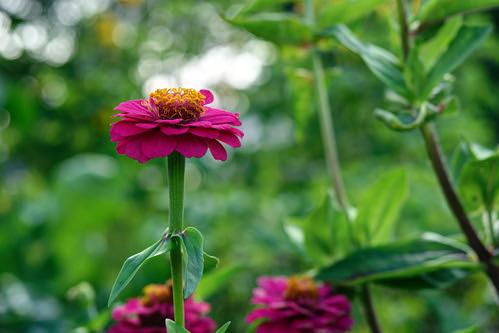 Flower 212 ©  Alexxx Malev