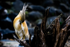 Hide and seek (James Jacques) Tags: sony a7 fe f4 nature wildlife bird praha prague zoo feather 70200