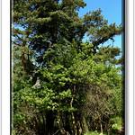 Andreas Kalbow Landschaft 2017.05.21 Fischland Darß (5) thumbnail