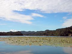 Jardín acuático (Alveart) Tags: guatemala río dulce riodulce izabal izaballake golfete golfetedulce suramerica southamerica latinoamerica latinamerica centroamerica centralamerica alveartluisalveartguatemala