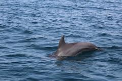 Delfine im Kisite Nationalpark