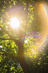 Flarious! (TheExplorographer.com) Tags: light photography backyard explore flare helio s442 summer sun travel tree