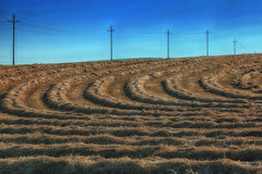 Curves (Ian Sane) Tags: ian sane images curves hay grass cut field power lines utility poles kings valley oregon landscape photography canon eos 5ds r camera ef70200mm f28l is usm lens