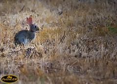 Tan tranquilito (PictureJem) Tags: conejo campo animales naturaleza