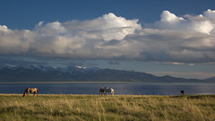 Kirghizie_204 (- RockMyBike -) Tags: paysage montagne landscape mountain kirghizistan kirghizie lac lake songkul sonkul couchédesoleil sunset horse chevaux