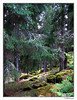 green woods (harrypwt) Tags: harrypwt canon finland canons90 s90 city nature paintinglike turku framed