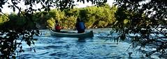 island visitors (jwc 3o2) Tags: ottawariver canoe