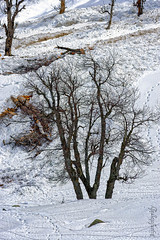 Snow 24 ... (Bijanfotografy) Tags: nikon nikond800 nikon180mm28afd snow sonamarg kashmir jammukashmir jk india mountainside northindia trees