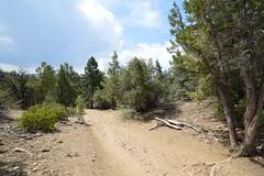 DSC_0225 (Six Sigma Man (2.700.000 views)) Tags: bigbear california bigbearlake cougarcresttrail nikon nikond3200