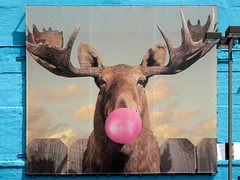 Bubblegum Moose (Atelier Teee) Tags: terencefaircloth atelierteee wallart moose wabashavenue bubblegum chicago illinois