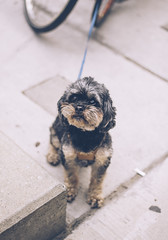 (candace.jenna) Tags: doggo dog pet toronto street 50mm nikon cute cutie happy love
