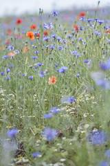 Flores (Afufinaa) Tags: flor flores floreciendo primavera rojo azul verde red blue flower campo nature naturaleza natural