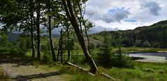 Tarn Side Walk (cassidymike21) Tags: walk tarn view water mountians path landscape
