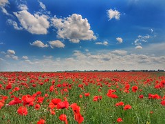 Field of poppies (Jaco Verheul) Tags: poppy poppies field green red jaco verheul phonephoto samsung s7 sky landscape clouds cloudporn cloud blue outdoor
